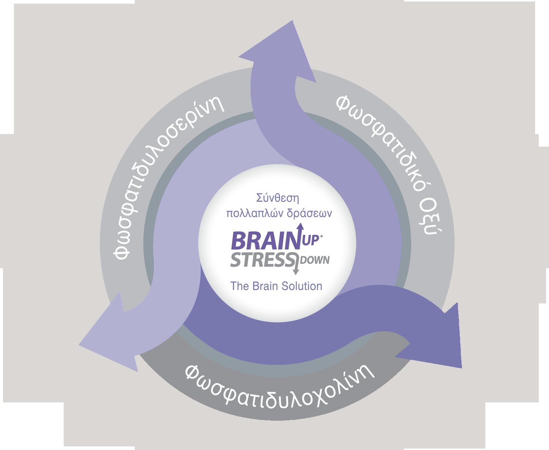 brainup_ingredients_mobile